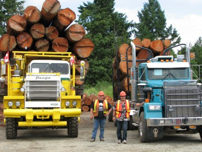Fully loaded logging trucks